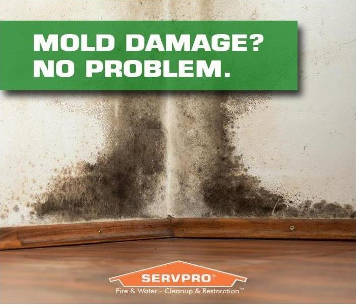 Mold Remediation If You Suspect Mold in Your Home