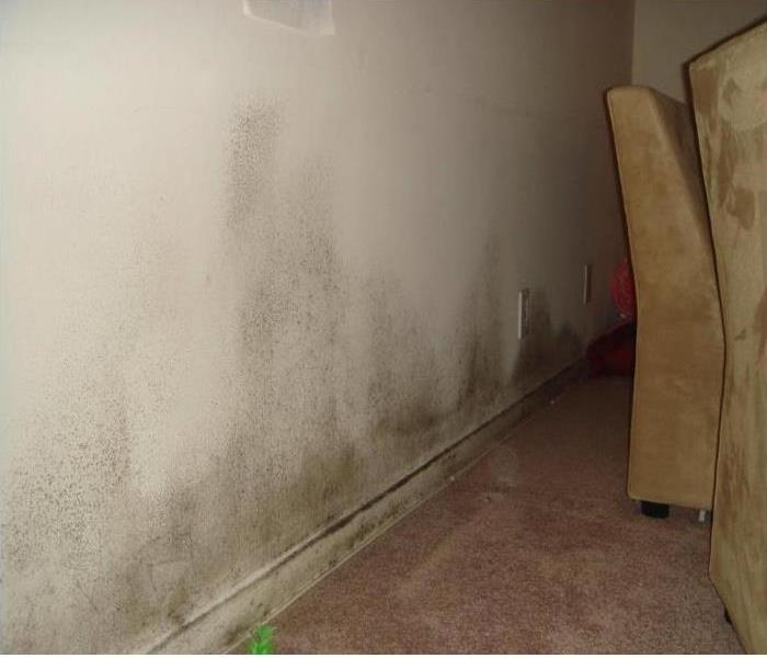 Mold Remediation Some Basic Mold Information